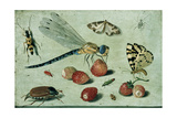 A Dragon-Fly, Two Moths, a Spider and Some Beetles, with Wild Strawberries, 17th Century Giclée-tryk af Jan Van, The Elder Kessel
