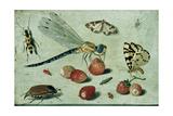 A Dragon-Fly, Two Moths, a Spider and Some Beetles, with Wild Strawberries, 17th Century Giclée-Druck von Jan Van, The Elder Kessel