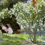 Roses, or the Artist's Wife in the Garden at Skagen, 1883 Giclée-tryk af Peder Severin Kröyer