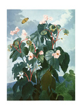 The Oblique-Leaved Begonia, Engraved by Caldwell, from 'The Temple of Flora' by Robert Thornton,… Giclee Print by Philip Reinagle