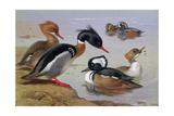 Ducks by a Lake Giclée-Druck von Archibald Thorburn