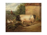 Portrait of a Prize Pig, Property of Squire Weston of Essex, 1810 Giclée-tryk af Edwin Henry Landseer
