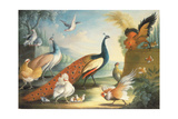 Two Peacocks, Doves, Chickens and a Rooster in a Parkland Lámina giclée por Marmaduke Cradock