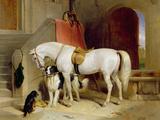 Prince George's Favourites Giclée-tryk af Edwin Henry Landseer