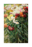 Clump of Chrysanthemums, Garden at Petit Gennevilliers, 1893 Giclee Print by Gustave Caillebotte