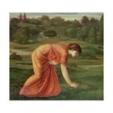 The March Marigold, C.1870 Reproduction procédé giclée par Edward Burne-Jones