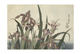 Irises and Grasshopper, Pub. by Nishimura Eijudo, C.1832 Impressão giclée por Katsushika Hokusai