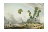 Cocoa Nut Walk on the Coast, Near Runaway Bay, Plate 15 from 'West Indian Scenery: Illustrations… Giclee Print by Joseph Bartholomew Kidd
