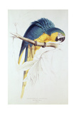 Blue and Yellow Macaw Giclée-Druck von Edward Lear
