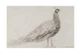 Peacock at Capel Curig, C.1845 Giclee Print by David Cox