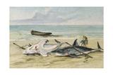 Man Measuring Two Dead Sharks on a Beach, Walvis Bay, Namibia, 1861 Giclée-tryk af Thomas Baines