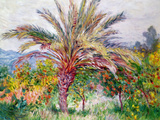 Palm Tree at Bordighera, C.1884 Impressão giclée por Claude Monet