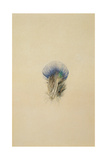 Study of a Peacock Feather, 1873 Giclee Print by John Ruskin