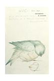 A Proud Mother' Giclée-tryk af Edward Burne-Jones