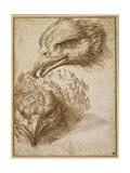 Studies of an Eagle's Head Giclée-Druck von Perino Del Vaga