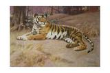 The Tiger Giclee-trykk av John Charles Dollman