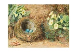 Bird's Nest with Three Blue Eggs and Primroses Giclee Print by William Henry Hunt