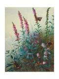 Purple Loosestrife and Watermint, C.1910-20 Giclée-Druck von Archibald Thorburn