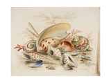 Study of Sea Shells, 1876 Giclee Print by Joseph Smith