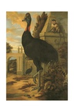 A Cassowary Giclee Print by Francis Barlow