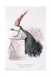 Parliamentary Carrot, Illustration from 'L'Empire Des Legumes Memoires De Curcubitus', Published… Giclée-Druck von Amedee Varin