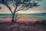 Memory Beach, Kauai Fotografisk trykk av Vincent James