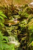 Bamboo Ravine, Maui Fotografisk trykk av Vincent James