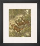 Small Roe Deer Print by Friedrich Specht