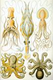 Gamochonia Nature Plastic Sign by Ernst Haeckel Plastikskilt