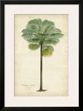 Palm of the Tropics II Posters por  Van Houtteano