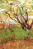 Vincent Van Gogh Orchard in Blossom Plastic Sign Plastikschild von Vincent van Gogh