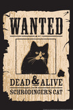 Schrodinger's Cat Snorg Tees Plastic Sign Plastic Sign by  Snorg