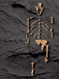 Footprints And Skeleton of Lucy Photographic Print by Javier Trueba