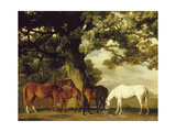 Green Pastures Premium Giclée-tryk af George Stubbs