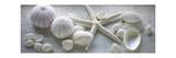 Driftwood Shells I Giclée-Premiumdruck von Bill Philip