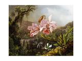 Orchids and Hummingbirds in a Brazilian Jungle Reproduction procédé giclée par Martin Johnson Heade