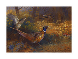 A Cock and Hen Pheasant at the Edge of a Wood Giclée-tryk af Archibald		 Thorburn