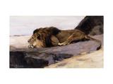 A Resting Lion Giclée-tryk af Wilhelm Kuhnert