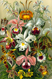 Orchidae Nature Plastic Sign by Ernst Haeckel Plastic Sign