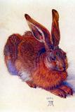Albrecht Durer Field Hare Plastic Sign Plastikschild von Albrecht Dürer
