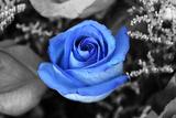 Blue Rose Plastic Sign Placa de plástico