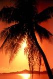 Ocean Tropical Sunset Palm Tree Plastic Sign Placa de plástico