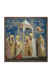 Life of Chris, Presentation at the Temple Poster af  Giotto di Bondone