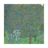 Rosebushes Under the Trees Giclée-Premiumdruck von Gustav Klimt