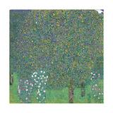 Rosebushes Under the Trees Posters tekijänä Gustav Klimt