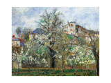Vegetable Garden and Trees in Blossom, Spring, Pontoise Prints by Camille Pissarro