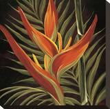 Aves del paraíso I Reproducción de lámina sobre lienzo por Yvette St. Amant