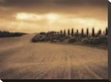 Cypress Study - Tuscany Kunst op gespannen canvas van Jamie Cook
