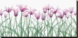 Floral Delight II Pingotettu canvasvedos tekijänä Jim Wehtje