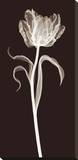 Parrot Tulip Pingotettu canvasvedos tekijänä Jim Wehtje